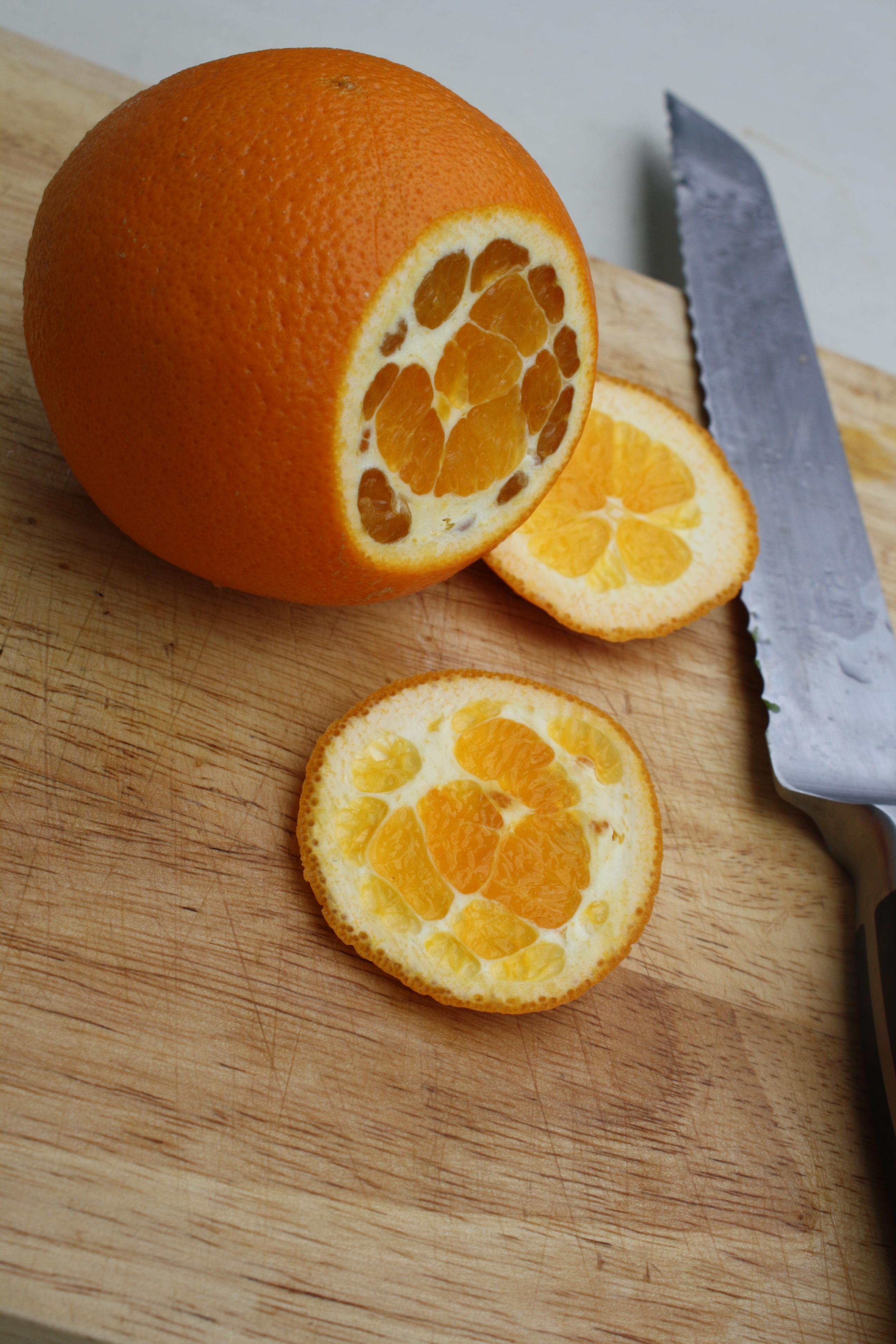 Citrus Segmenting 1-1